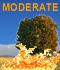 Fire Weather Index: MODERATE